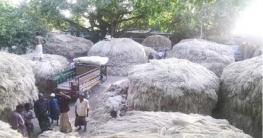 কৃষকের মুখে সোনালি হাসি