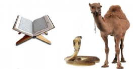 কোরআনের বিস্ময়কর তথ্য.. যে কারণে উট জীবিত সাপ খায়
