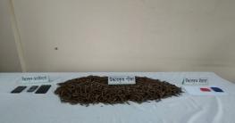 সলঙ্গায় র্যাবের অভিযানে ইয়াবা ও গাঁজাসহ ২ মাদক ব্যবসায়ী গ্রেফতা