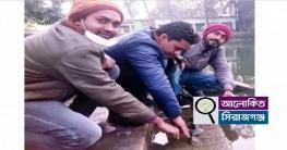 উল্লাপাড়া সাতটি কচ্ছপ উদ্ধার,উপজেলা পুকুরে অবমুক্ত