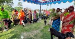 কাজিপুরে হতদরিদ্র নারীদের মাঝে ছাগল ও গাছের চারা বিতরণ